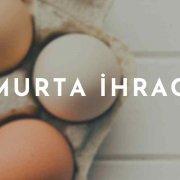 Yumurta İhracatı