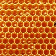 bal üreten arılar