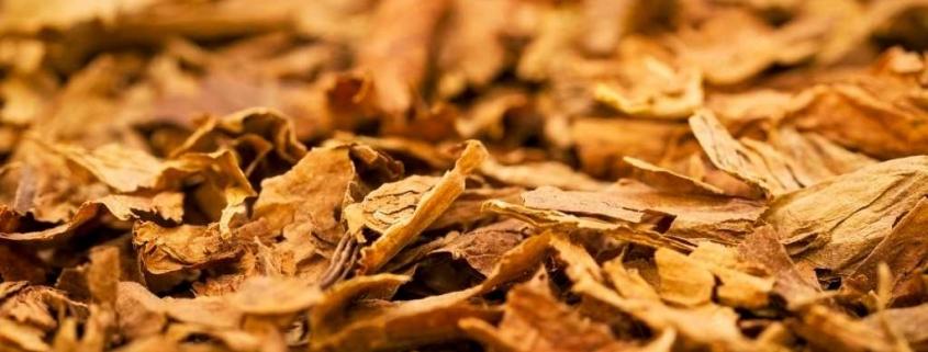 Tütün İhracatı Nasıl Yapılır? 1